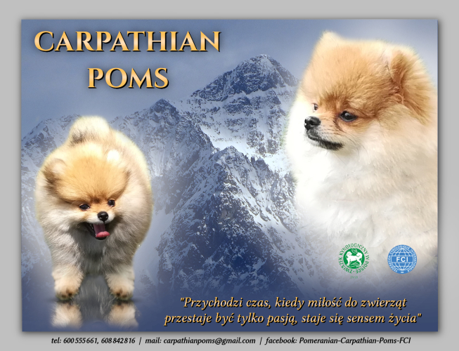 Carpathian Poms